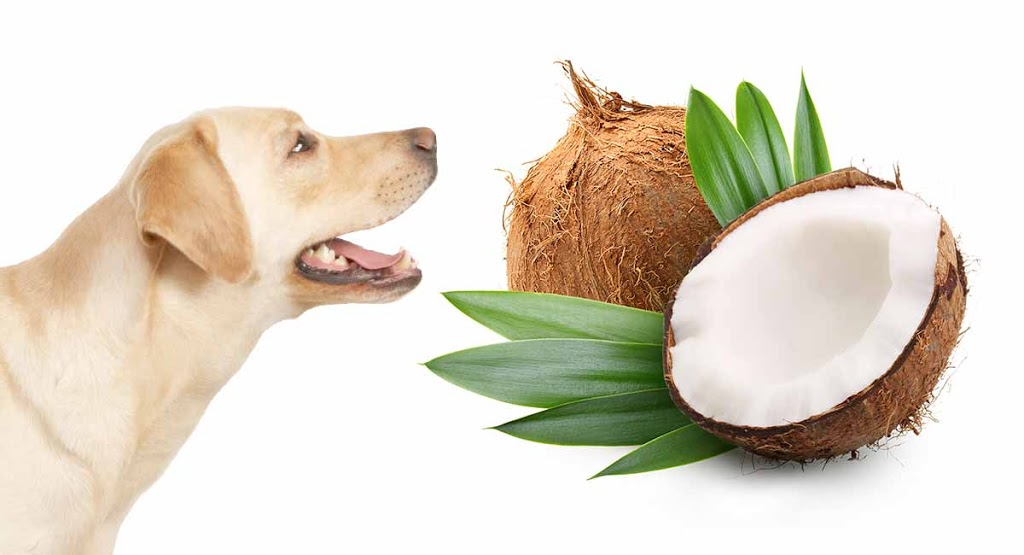 How To Apply Coconut Oil To Dog, Natural Flea Killer