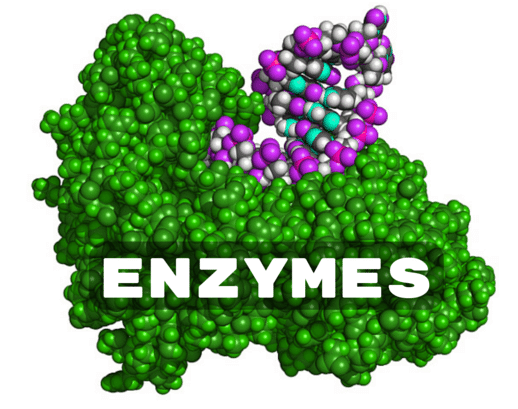 Best Digestive Enzyme Supplements | Amylase, Lipase
