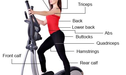 What Muscles Does The Elliptical Work
