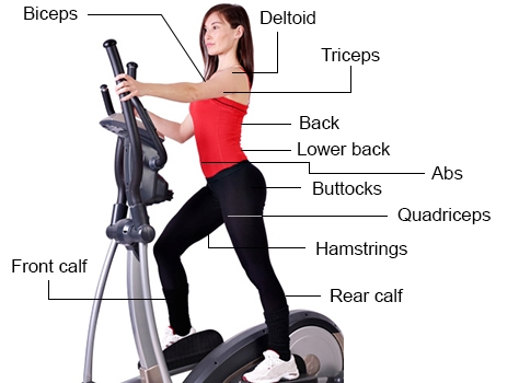 What Muscles Does The Elliptical Work | Machine Work