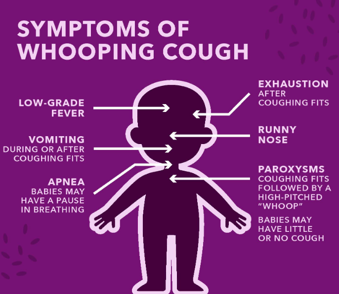 Pertussis Or Whooping Cough Treatment In Adults & Babies Vaccination & Home Cure